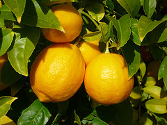 Lemon (USA- California)