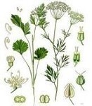 Anise 15 ml. (1/2 oz)