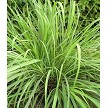 Lemongrass 4 oz.
